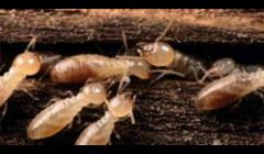 Termite Inspections Cincinnati