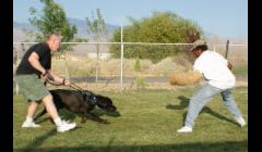 Dog Trainer Las Vegas NV