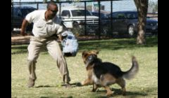 K-9 Training Las Vegas NV