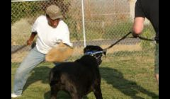 Dog Obedience Las Vegas NV