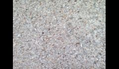 Sea Shell Exposed Aggregate