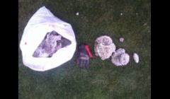 Here's a 13 gallon trash bag full of paper nest material. That glove is size XL.