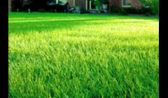 Landscaper Fort Myers FL