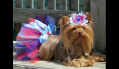 Barbie is modelling our boutique tutu for the Fourth of July.  Boutique tutus come with extra special touches, like bows, bling, etc.  We offer a large selection of these tutus in all sizes for $10, plus shipping.