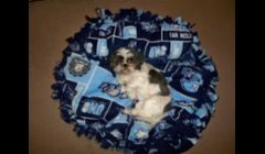 Molly is modeling our Carolina Tarheels bed with matching pillow for larger breeds.  She just happens to like a super large bed:)  These beds range in price from $20-$45, depending on the size.