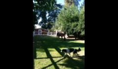 Jake running around with the horses