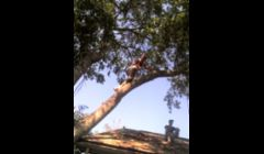 at a tree job \