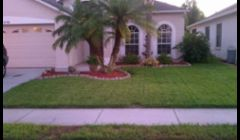 Tender Loving Lawn Care \nTree Pruning\nTrinity, Florida